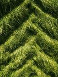 Следы автошины трактора в вертикали зеленой травы Стоковое фото RF