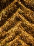 Следы автошины трактора в вертикали сухой травы Стоковое Изображение