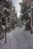 Следы ботинка снега в лесе зимы Стоковое Изображение RF
