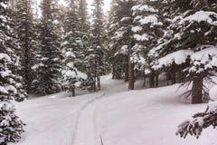 Следы ботинка снега около озера Brainerd в лесе зимы Колорадо Стоковые Фотографии RF