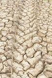 Следы в грязи Стоковое Фото