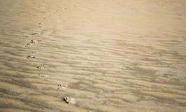 Следы в песке Стоковые Фото