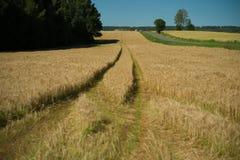Следы в поле Стоковые Фотографии RF