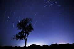 Следы дерева Стоковое Фото