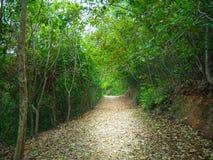 Следы леса нерезкости идя стоковые фотографии rf