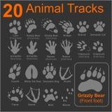 Следы животных - комплект вектора Стоковое Изображение
