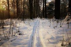 Следы зимы в лесе стоковое изображение