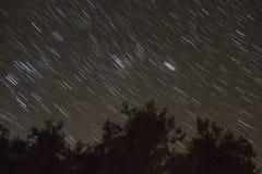 Следы и деревья звезд Стоковая Фотография