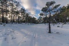Следы катания на лыжах в ландшафте зимы в Норвегии стоковое изображение