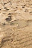 Следы насекомого в песке Стоковое Изображение