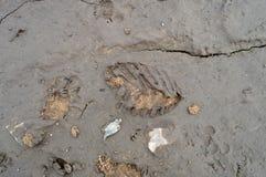 Следы ноги в грязи Стоковая Фотография