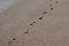 Следы ноги в песке 3 Стоковое Изображение RF