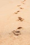 Следы ноги в песке Стоковое Изображение RF