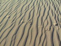 Следы ноги в песке Стоковое Фото