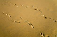 Следы ноги женщины и собаки на песке Стоковые Изображения