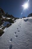 Следы ноги зимы Стоковая Фотография