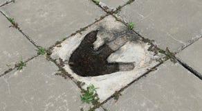 Следы ноги динозавра Стоковое Изображение