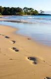 Следы ноги на влажном песке стоковое изображение