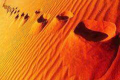 Следы ноги на песчанной дюне стоковые фотографии rf