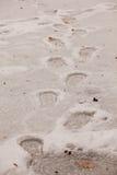 Следы ноги на льде стоковые фотографии rf