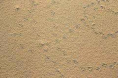 Следы ноги птицы в песке Естественная предпосылка Стоковая Фотография