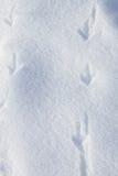 Следы ноги птиц в снеге Стоковые Изображения