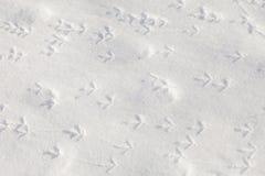 Следы ноги птиц в снеге Стоковые Изображения RF