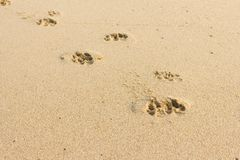 Следы ноги собаки в предпосылке песка Стоковые Изображения RF