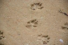 Следы ноги собаки Стоковая Фотография