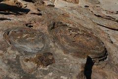 Следы ноги Dino Стоковая Фотография RF