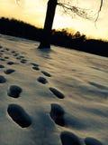 Следы ноги Snowy Стоковое Изображение RF