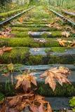 Следы осенью стоковая фотография rf