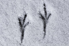 Следы птицы в снеге Стоковые Фотографии RF