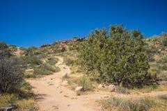 Следы соединяются в пустыне Стоковые Изображения RF