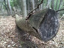 След Seaton, Pickering, Онтарио Деревья и природа Стоковые Изображения