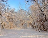 След Snowy стоковые изображения rf