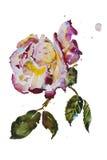 Сливк и роза пурпура с листьями с пятнами grunge первоначально Стоковые Изображения RF