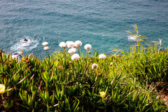 Слитые цветки и океан стоковая фотография rf