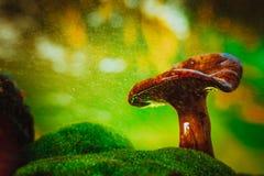 С капанием крышки гриба лисички дождь брызгает Стоковое Фото