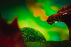 С капанием крышки гриба лисички дождь брызгает Стоковые Изображения