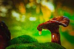 С капанием крышки гриба лисички дождь брызгает Стоковое фото RF