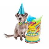 С днем рождения собака партии стоковое изображение rf