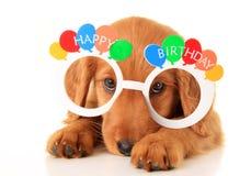 С днем рождения щенок стоковое изображение rf