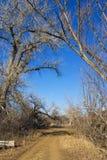 Сдобренная тропа в зиме Стоковое Изображение