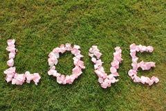 Слово влюбленности на зеленой траве Стоковые Фото