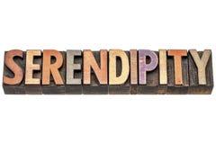 Слово серендипити в деревянном типе Стоковые Изображения RF