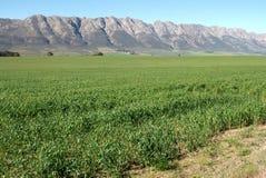 Сложенная гора Стоковая Фотография RF