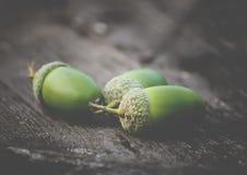 Сложенная куча зеленых жолудей Стоковые Изображения RF