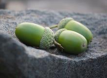 Сложенная куча зеленых жолудей Стоковая Фотография RF