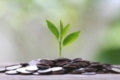 Сложите серебряную монету и treetop растя на деревянных поле и colorfu Стоковое Изображение